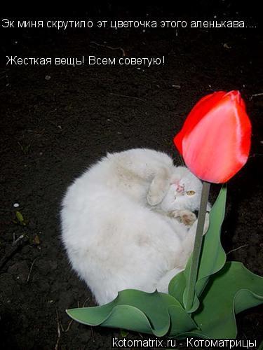 Котоматрица: Эк миня скрутило эт цветочка этого аленькава.... Жесткая вещь! Всем советую!