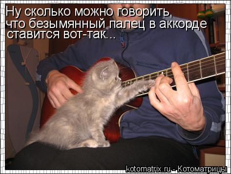 Котоматрица: Ну сколько можно говорить,  что безымянный палец в аккорде  ставится вот-так...