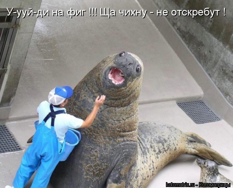 Котоматрица: У-ууй-ди на фиг !!! Ща чихну - не отскребут !