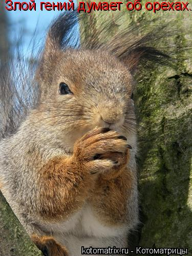 Котоматрица: Злой гений думает об орехах...