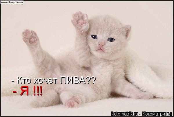 Котоматрица: - Кто хочет ПИВА?? - Я !!!