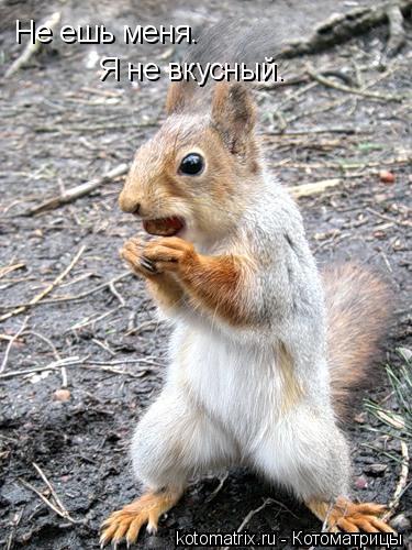 Котоматрица: Не ешь меня. Я не вкусный.