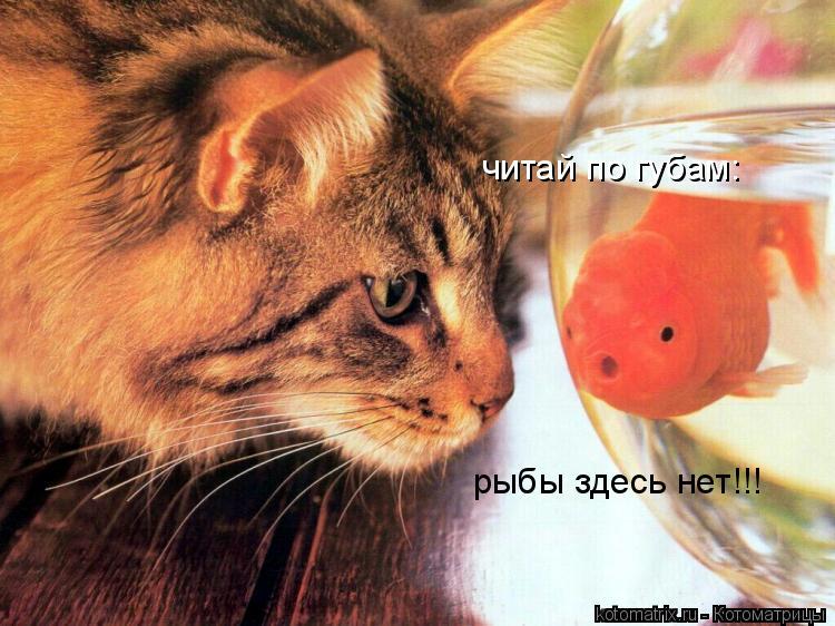 Котоматрица: рыбы здесь нет!!! читай по губам: