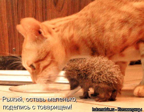 Котоматрица: Рыжий, оставь маленько, поделись с товарищем!