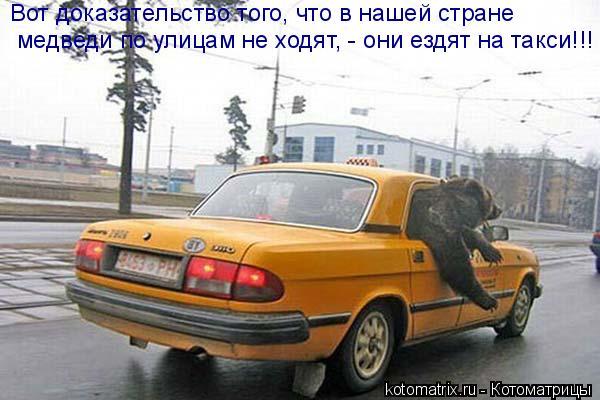 Котоматрица: Вот доказательство того, что в нашей стране медведи по улицам не ходят, - они ездят на такси!!!