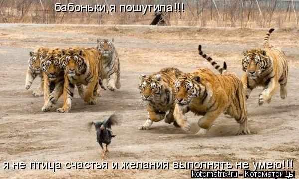Котоматрица: бабоньки,я пошутила!!! я не птица счастья и желания выполнять не умею!!!