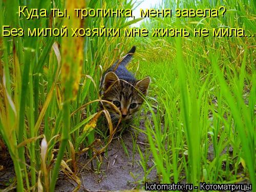 Котоматрица: Куда ты, тропинка, меня завела? Без милой хозяйки мне жизнь не мила...