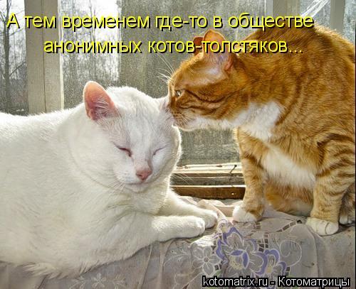 Котоматрица: А тем временем где-то в обществе анонимных котов-толстяков...