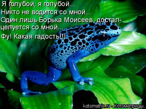 Котоматрица: Я голубой, я голубой... Никто не водится со мной... Один лишь Борька Моисеев, достал- целуется со мной... Фу! Какая гадость!!!
