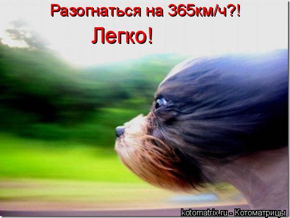 Котоматрица: Разогнаться на 365км/ч?! Легко!