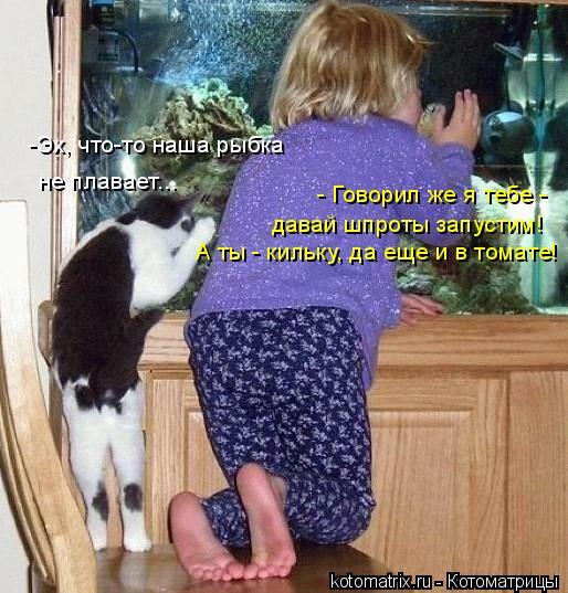 Котоматрица: -Эх, что-то наша рыбка не плавает... - Говорил же я тебе -  давай шпроты запустим! А ты - кильку, да еще и в томате!