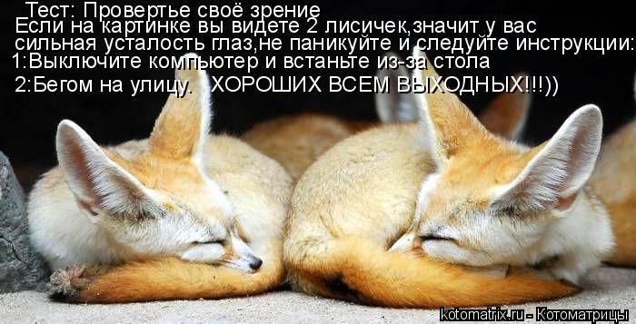 Котоматрица: Тест: Провертье своё зрение Если на картинке вы видете 2 лисичек,значит у вас  сильная усталость глаз,не паникуйте и следуйте инструкции: 1:В