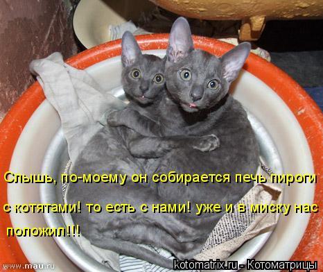 Котоматрица: Слышь, по-моему он собирается печь пироги  с котятами! то есть с нами! уже и в миску нас  положил!!!
