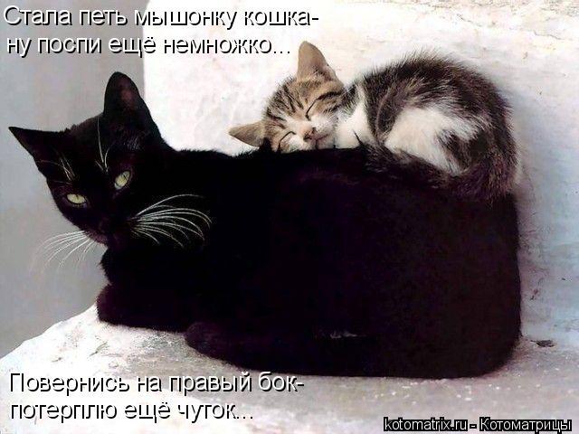 Котоматрица: Стала петь мышонку кошка- ну поспи ещё немножко... Повернись на правый бок- потерплю ещё чуток...