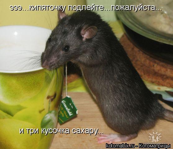 Котоматрица: эээ...кипяточку подлейте...пожалуйста... и три кусочка сахару...