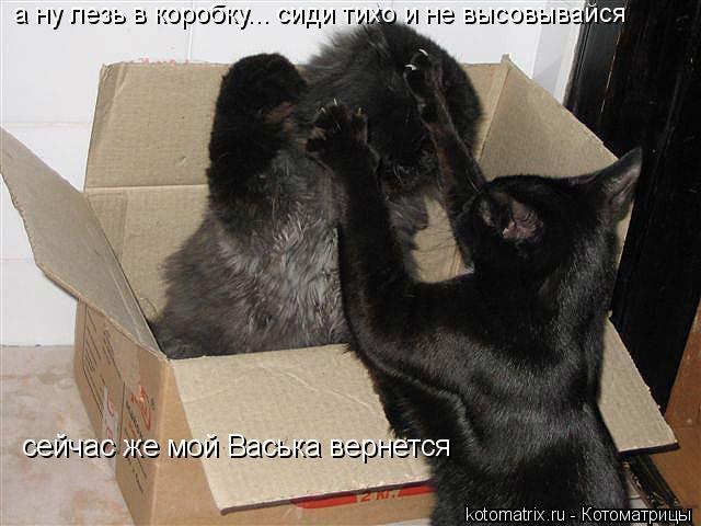 Котоматрица: сейчас же мой Васька вернется а ну лезь в коробку... сиди тихо и не высовывайся