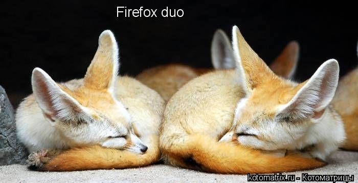 Котоматрица: Firefox duo