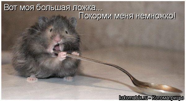 Котоматрица: Вот моя большая ложка... Покорми меня немножко!