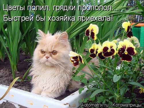Котоматрица: Цветы полил, грядки прополол... Быстрей бы хозяйка приехала!