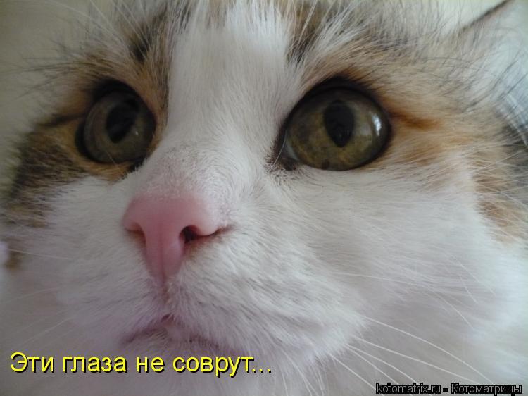 Котоматрица: Эти глаза не соврут...