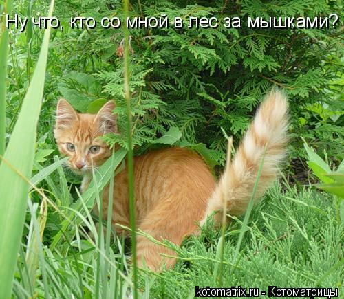 Котоматрица: Ну что, кто со мной в лес за мышками?