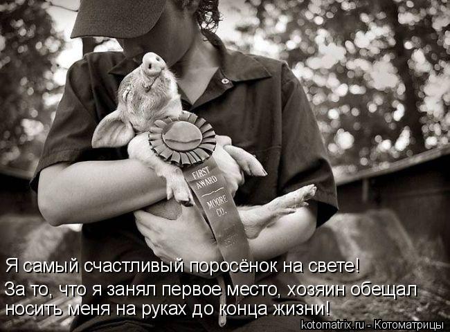 Котоматрица: Я самый счастливый поросёнок на свете! За то, что я занял первое место, хозяин обещал носить меня на руках до конца жизни!
