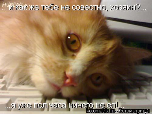Котоматрица: ...и как же тебе не совестно, хозяин?... ...я уже пол часа ничего не ел!...
