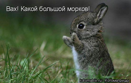 Котоматрица: Вах! Какой большой морков!