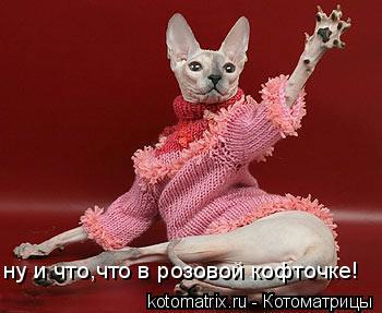 Котоматрица: ну и что,что в розовой кофточке!