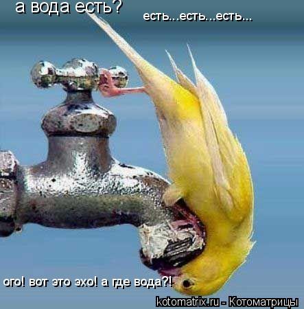 Котоматрица: а вода есть? есть...есть...есть... ого! вот это эхо! а где вода?!
