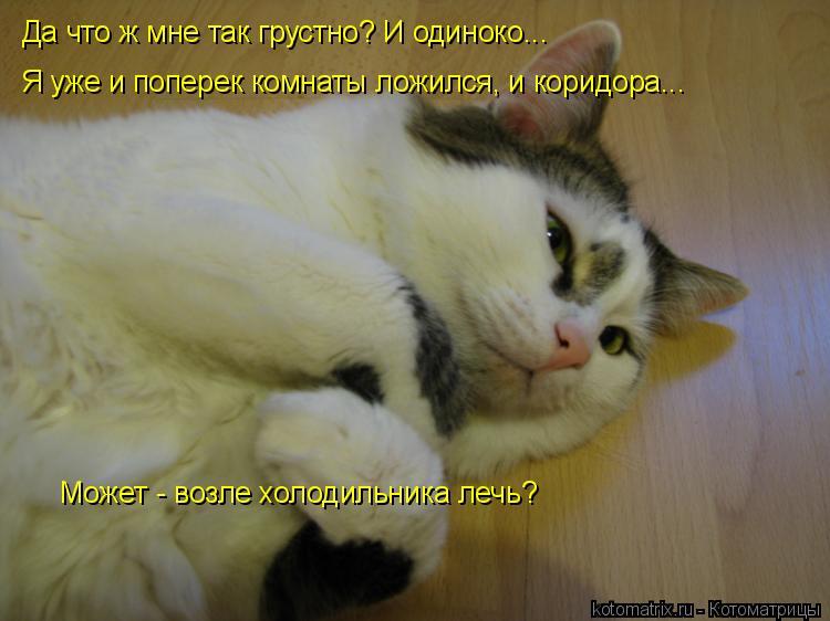 Котоматрица: Да что ж мне так грустно? И одиноко... Я уже и поперек комнаты ложился, и коридора... Может - возле холодильника лечь?