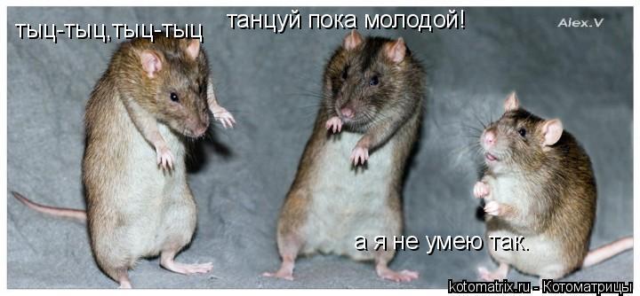 Котоматрица: тыц-тыц,тыц-тыц танцуй пока молодой! а я не умею так.