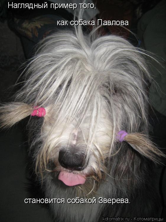 Котоматрица: Наглядный пример того, как собака Павлова  становится собакой Зверева.