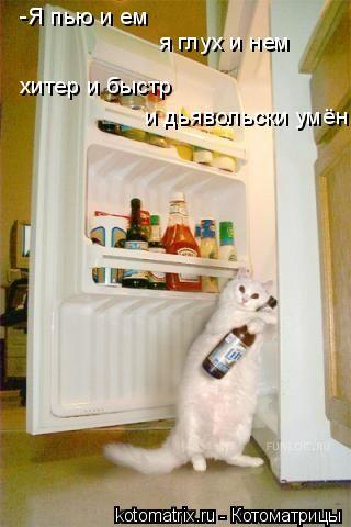 Котоматрица: -Я пью и ем я глух и нем хитер и быстр и дьявольски умён...