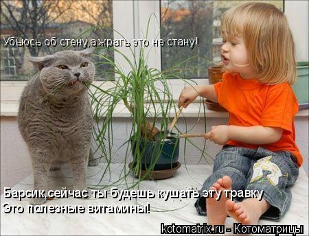 Котоматрица: Барсик,сейчас ты будешь кушать эту травку Это полезные витамины! Убьюсь об стену,а жрать это не стану!