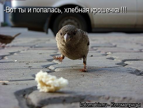 Котоматрица: -Вот ты и попалась, хлебная крошечка !!!