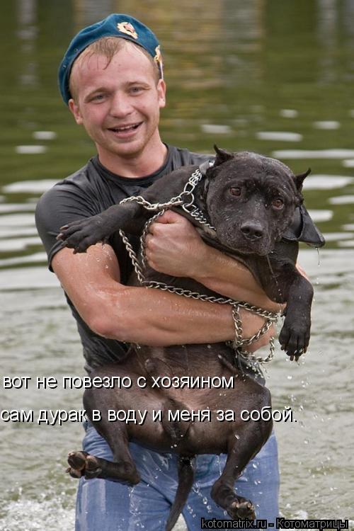 Котоматрица: вот не повезло с хозяином сам дурак в воду и меня за собой.
