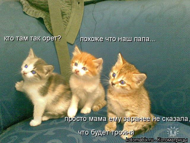 Котоматрица: кто там так орет? похоже что наш папа... просто мама ему заранее не сказала, что будет тройня
