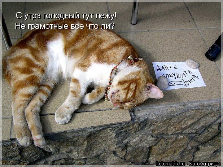 Котоматрица: -С утра голодный тут лежу! Не грамотные все что ли?
