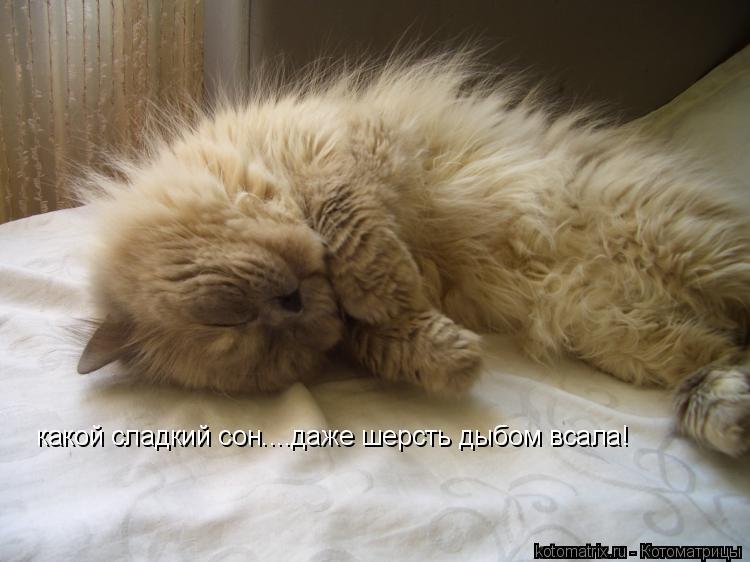 Котоматрица: какой сладкий сон....даже шерсть дыбом всала!