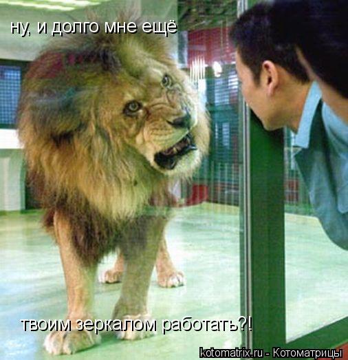 Котоматрица: ну, и долго мне ещё твоим зеркалом работать?!