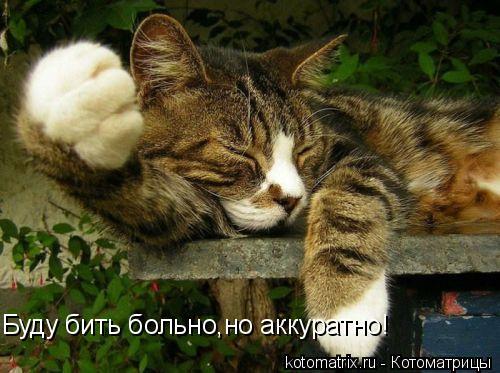 Котоматрица: Буду бить больно,но аккуратно!