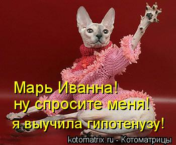 Котоматрица: Марь Иванна! ну спросите меня! я выучила гипотенузу!