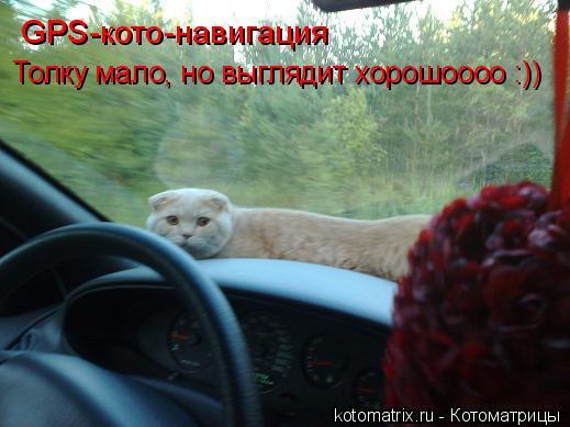 Котоматрица: GPS-кото-навигация Толку мало, но выглядит хорошоооо :))