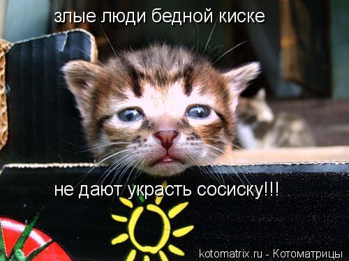 Котоматрица: злые люди бедной киске не дают украсть сосиску!!!