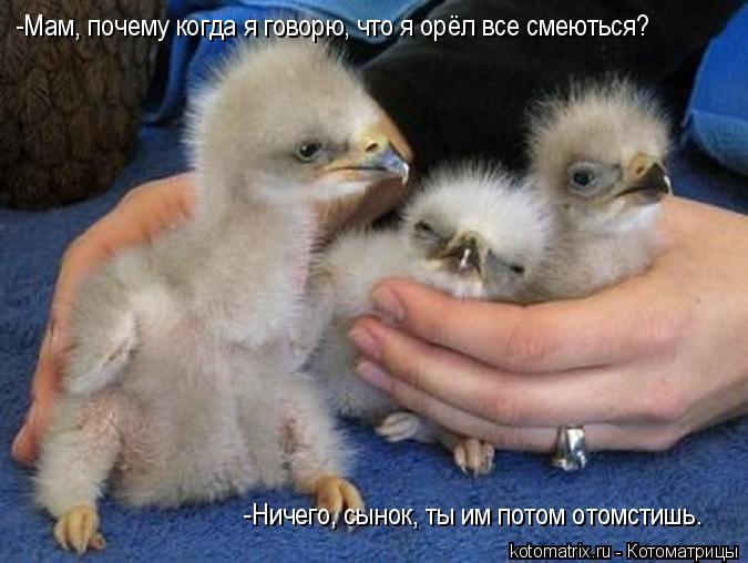Котоматрица: -Мам, почему когда я говорю, что я орёл все смеються? -Ничего, сынок, ты им потом отомстишь.