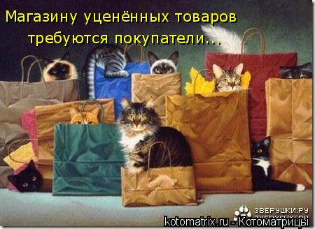 Котоматрица: Магазину уценённых товаров требуются покупатели...