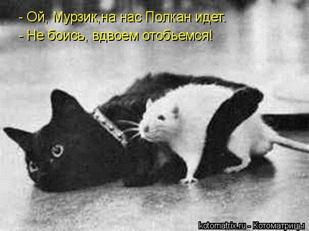Котоматрица: - Ой, Мурзик,на нас Полкан идет. - Не боись, вдвоем отобьемся!