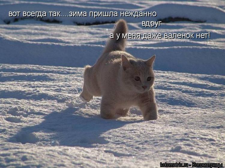 Котоматрица: вот всегда так....зима пришла нежданно вдруг а у меня даже валенок нет!