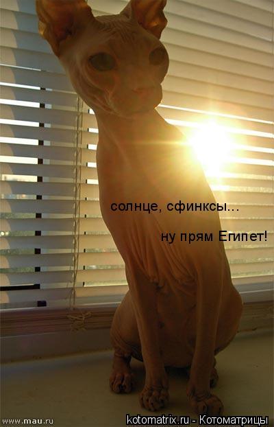 Котоматрица: солнце, сфинксы... ну прям Египет!
